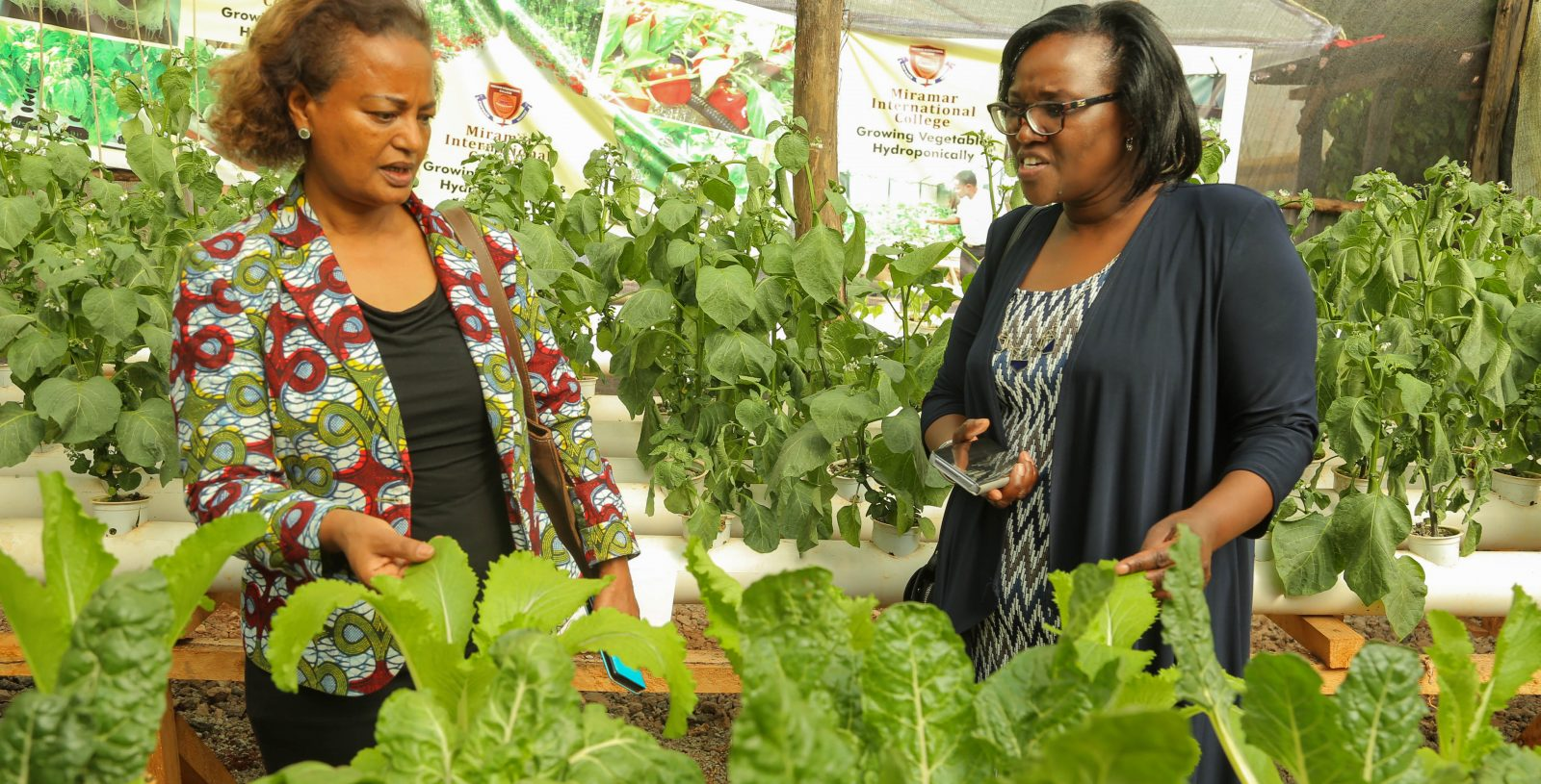KCB Foundation and GIZ Boost Support for Hydroponic Farming