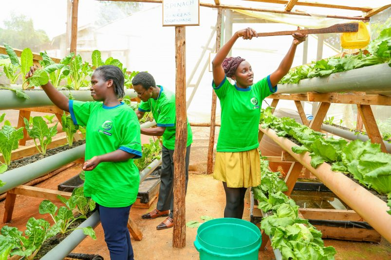 KCB Foundation and GIZ Intensify Support for Youth in Agriculture